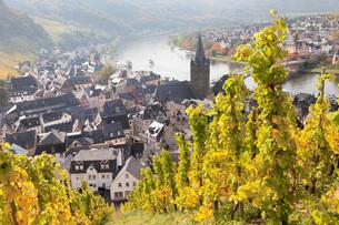 Bernkastel-Kues in autumn, Moselle Valley, Rhineland-Palatinate, Germany, Europeの写真素材 [FYI03788329]