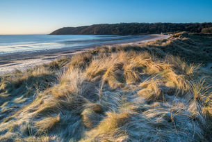 Sand dunes and frost, Oxwich Bay, Gower Peninsula, South Wales, United Kingdom, Europeの写真素材 [FYI03788619]