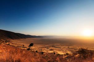 Sunrise, Ngorongoro Crater Conservation Area, UNESCO World Heritage Site, Tanzania, East Africa, Afrの写真素材 [FYI03788673]