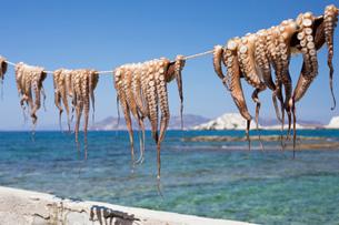 Drying Octopus, Mandrakia, Milos, Cyclades, Aegean Sea, Greek Islands, Greece, Europeの写真素材 [FYI03789168]
