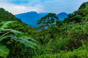 Scenic of the tea country in Sri Lanka, Asiaの写真素材 [FYI03789262]