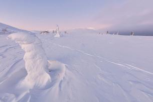 Frozen dwarf shrub in the snow, Pallas-Yllastunturi National Park, Muonio, Lapland, Finland, Europeの写真素材 [FYI03789291]
