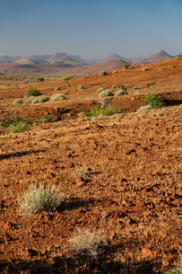 Typical red gravelly terrain, Etendeka, Namibia, Africaの写真素材 [FYI03789737]