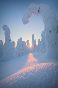 Sunburst on frozen trees at dawn, Riisitunturi National Park, Posio, Lapland, Finland, Europeの写真素材 [FYI03790084]
