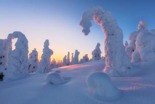 Sunburst on frozen trees at dawn, Riisitunturi National Park, Posio, Lapland, Finland, Europeの写真素材 [FYI03790088]