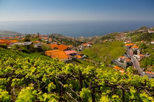 View of vineyard, countryside and Atlantic Ocean near Cabo Girao, Camara de Lobos, Madeira, Portugalの写真素材 [FYI03790147]
