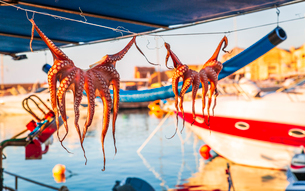 Octopuses hung up to dry on washing lines, Chania, Crete, Greek Islands, Greece, Europeの写真素材 [FYI03790201]