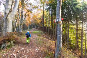 Hiker in the woods during autumn, Piani Resinelli, Valsassina, Lecco province, Lombardy, Italy, Euroの写真素材 [FYI03790305]