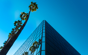 Palm trees and glass building, worm's-eye view, Hollywood, Los Angeles, California, United States ofの写真素材 [FYI03790418]