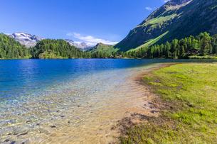 Clear water at Lake Cavloc, Forno Valley, Maloja Pass, Engadine, Graubunden, Switzerland, Europeの写真素材 [FYI03790532]