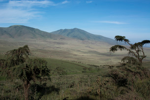Ngorongoro Crater, UNESCO World Heritage Site, Ngorongoro Conservation Area, Serengeti, Tanzania, Eaの写真素材 [FYI03790622]