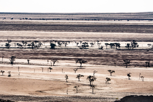 Layered landscape of plains punctuated by silhouetted dark trees, south of Walvis Bay, Namibia, Afriの写真素材 [FYI03790718]