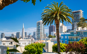 Downtown San Francisco with the Transamerica Pyramid and huge palm tree, San Francisco, California,の写真素材 [FYI03790812]