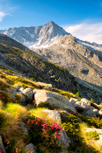 Mount Adamello in the summer season, Parco Adamello, Vallecamonica (Val Camonica), Brescia Province,の写真素材 [FYI03790831]