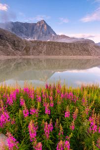 Mount Adamello in the summer season, Parco Adamello, Vallecamonica (Val Camonica), Brescia Province,の写真素材 [FYI03790836]