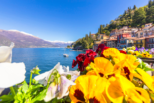 Colourful flowers by the lake, Varenna, Province of Lecco, Lake Como, Italian Lakes, Lombardy, Italyの写真素材 [FYI03791143]
