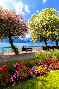 Two people sitting on a bench looking at the lake, Bellagio, Province of Como, Lake Como, Italian Laの写真素材 [FYI03791156]