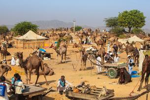 Pushkar Camel Fair, Pushkar, Rajasthan, India, Asiaの写真素材 [FYI03791247]