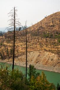 View of barren land following recent fire near Kamloops, British Columbia, Canada, North Americaの写真素材 [FYI03791336]