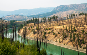 View of barren land following recent fire near Kamloops, British Columbia, Canada, North Americaの写真素材 [FYI03791338]