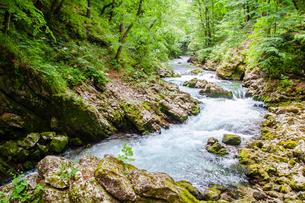 Radovna River flowing through Vintgar Gorge, near Bled, Slovenia, Europeの写真素材 [FYI03792201]