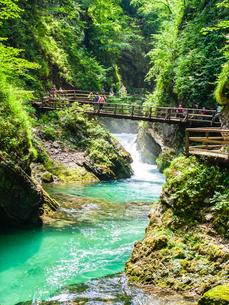 Radovna River flowing through Vintgar Gorge, near Bled, Slovenia, Europeの写真素材 [FYI03792202]