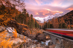 Bernina Express train in transit along colorful woods in autumn, Morteratsch, Engadine, canton of Grの写真素材 [FYI03792223]
