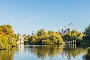 A view of St. James's Park lake and the London Eye in the background in St. James's Park, London, Enの写真素材 [FYI03792229]