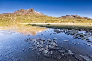Lago Bianco surrounded by fields of wildflowers, Gavia Pass, Valfurva, Valtellina, province of Sondrの写真素材 [FYI03792289]