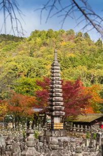 Adashino Nenbutsu-Ji Temple, Arashiyama, Kyoto, Japan, Asiaの写真素材 [FYI03792491]