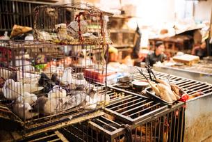 Zhongyi Market, Lijiang, Yunnan Province, China, Asiaの写真素材 [FYI03792548]