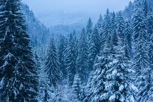 Winter landscapes of Carpathian Mountains near Brasov, Brasov County, Romania, Europeの写真素材 [FYI03792994]