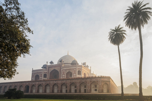 Palm trees by Humayun's Tomb at sunrise in Delhi, India, Asiaの写真素材 [FYI03793045]