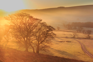 Misty and frosty suNoise with a copse of trees in winter, Castleton, Peak District National Park, Hoの写真素材 [FYI03793432]
