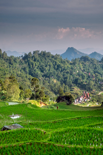 Rice paddy fields in the highlands, Tana Toraja, Sulawesi, Indonesia, Southeast Asia, Asiaの写真素材 [FYI03793599]