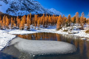 Red larches frame the frozen Lake Mufule, Malenco Valley, Province of Sondrio, Valtellina, Lombardy,の写真素材 [FYI03793629]