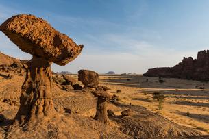 The mushroom rock formations, Ennedi Plateau, UNESCO World Heritage Site, Ennedi region, Chad, Africの写真素材 [FYI03793921]