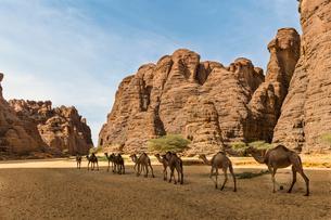 Animals at a waterhole in a rock amphitheatre, Ennedi Plateau, UNESCO World Heritage Site, Ennedi reの写真素材 [FYI03793934]