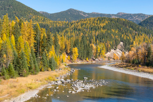 Fall colours along McDonald Creek, Glacier National Park, Montana, United States of America, North Aの写真素材 [FYI03794421]