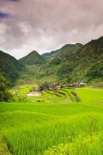 Rice Terraces, Bangaan, UNESCO World Heritage Site, Luzon, Philippines, Southeast Asia, Asiaの写真素材 [FYI03794510]