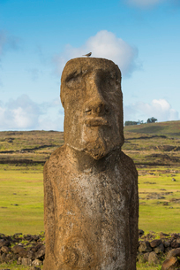 Moai heads of Easter Island, Rapa Nui National Park, UNESCO World Heritage Site, Easter Island, Chilの写真素材 [FYI03794595]