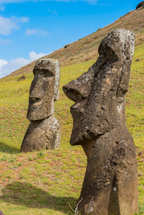 Moai heads of Easter Island, Rapa Nui National Park, UNESCO World Heritage Site, Easter Island, Chilの写真素材 [FYI03794631]