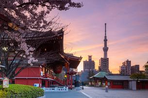 Sunrise at Sensoji Temple in Cherry blossom season, Tokyo, Japan, Asiaの写真素材 [FYI03794712]