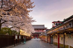 Sensoji Temple in Cherry blossom season, Tokyo, Japan, Asiaの写真素材 [FYI03794715]