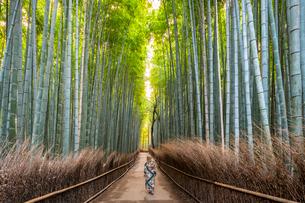Arashiyama Bamboo Grove Kyoto, Japan, Asiaの写真素材 [FYI03794731]