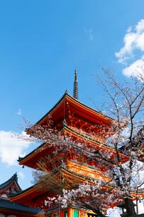 Kiyomizu-dera temple, UNESCO World Heritage Site, Kyoto, Japan, Asiaの写真素材 [FYI03794737]