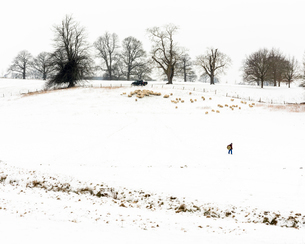 Farmer carrying hay, with sheep, in snow covered field, Kent, England, United Kingdom, Europeの写真素材 [FYI03794897]