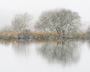 Hawthorn and snowfall, Broad Pool, Gower, South Wales, United Kingdom, Europeの写真素材 [FYI03794910]