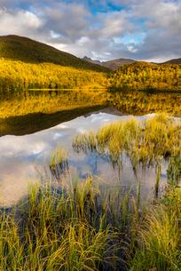 Lake reflection, autumn colour, Senja, Norway, Scandinavia, Europeの写真素材 [FYI03795022]