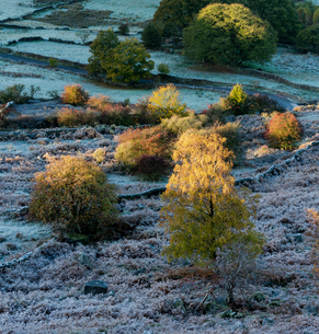 Frost covered trees and fields in autumn, Peak District National Park, Derbyshire, England, United Kの写真素材 [FYI03795101]